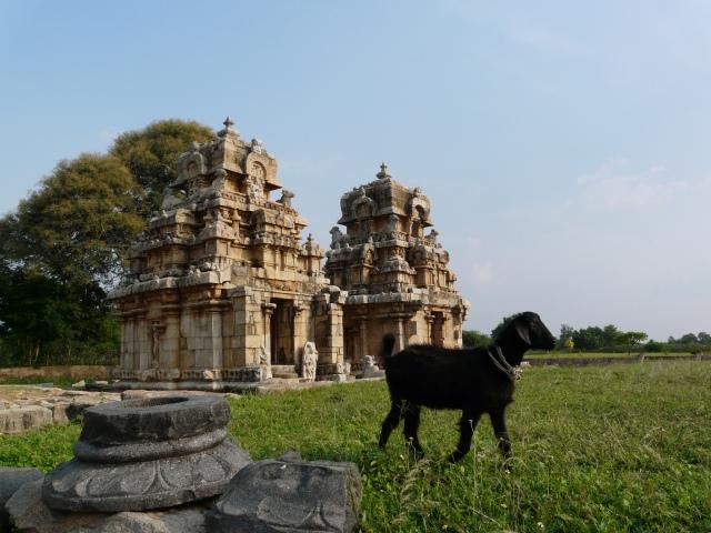 Muvarkovil (temples) and goat, Kodumbalur, Tamil Nadu