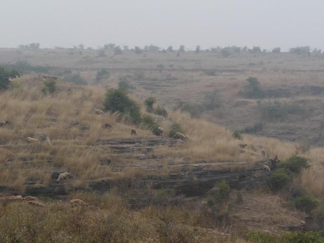 01 02 nareshwar