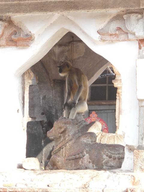 monkey 01